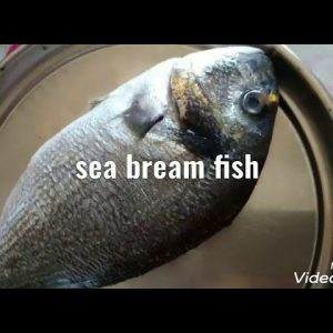 Sea bream fish dishes recepi