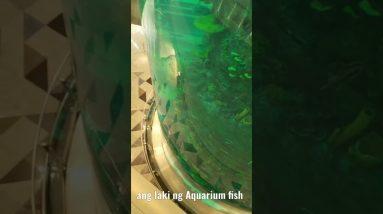 Aquarium fish sa airport ng saudi ang laki