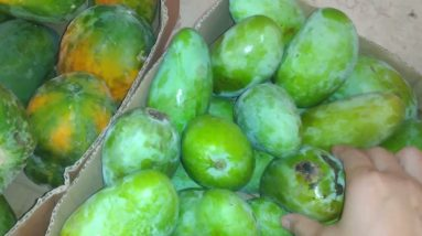 Daming blessing   ang daming mangga at papaya gusto niyo