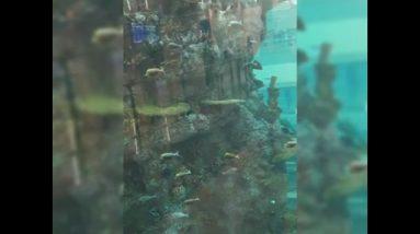 Amazing Aquarium so many fish
