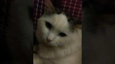 my cute white cat